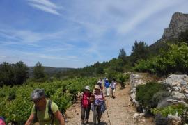 Au coeur du vignoble du Roussillon